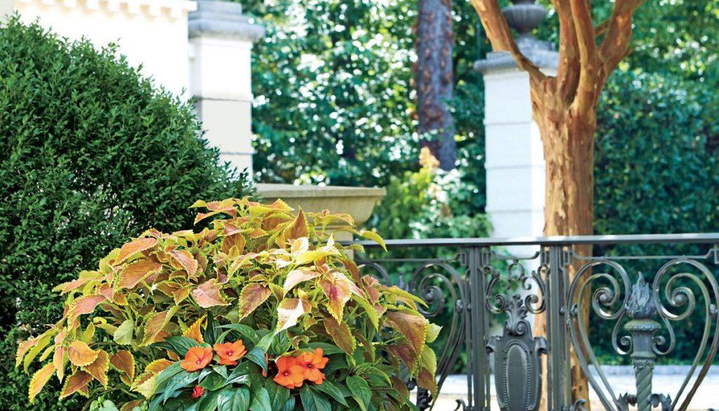 orange-green-container-garden-2349202-18391